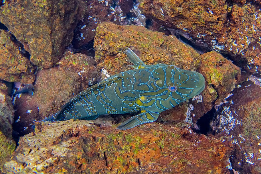 galapagos - Galapagos_FB_2-60.jpg