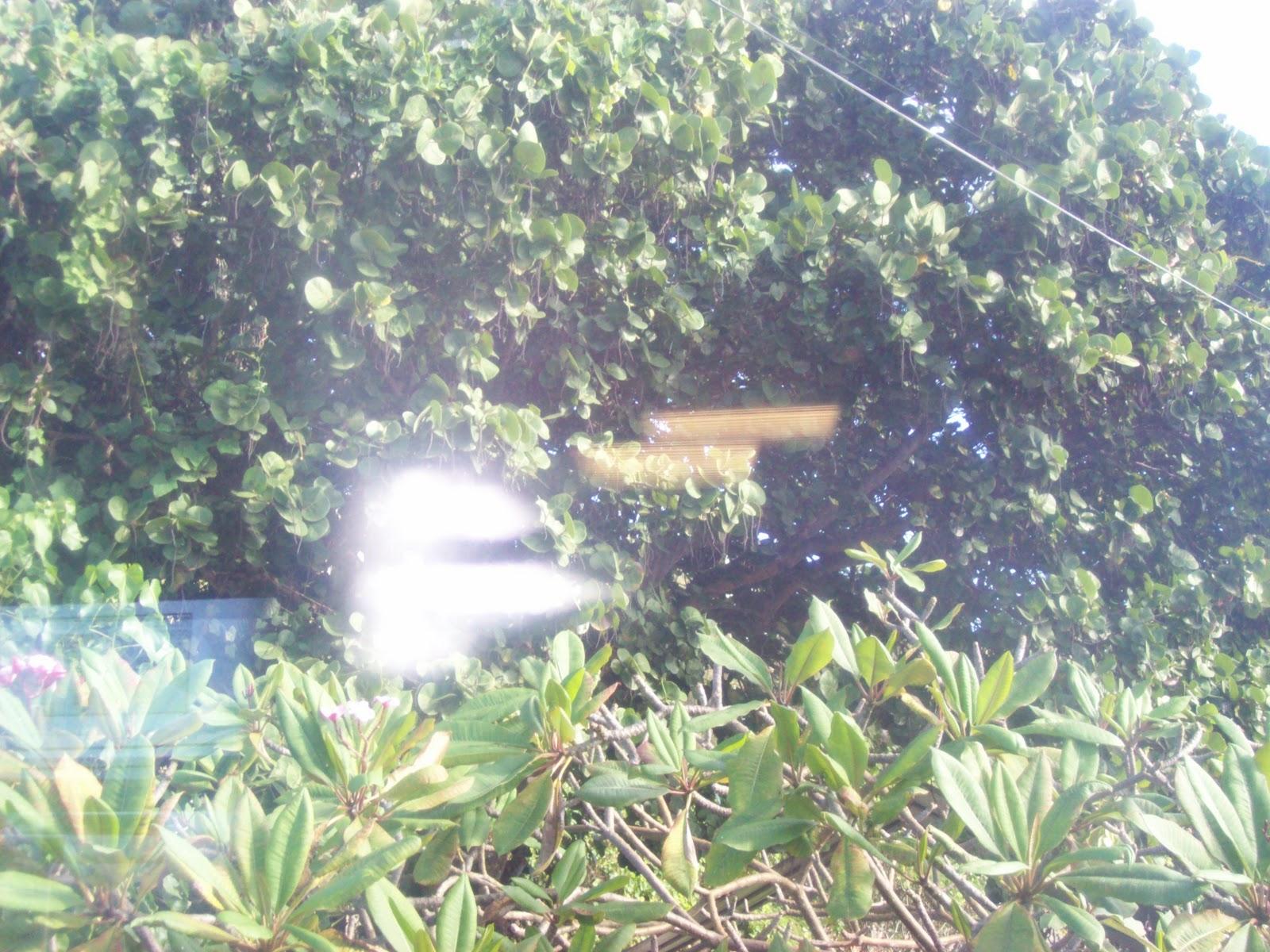 Hawaii Day 3 - 100_6920.JPG