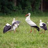 Vogels en dieren - IMG_7285.JPG