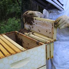 PLC Honey Fiesta 7/10/16 - IMG_3584.JPG