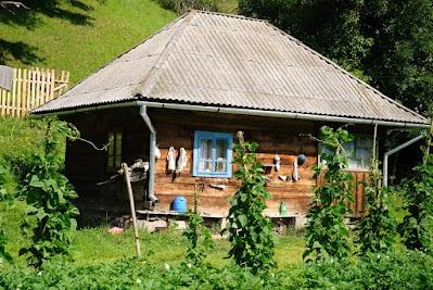 Garten mit Bohnen