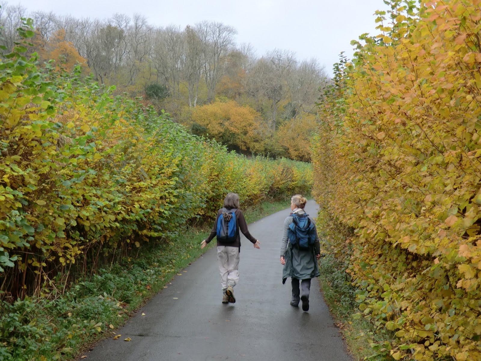 CIMG0206 Autumn colours on Forge Road