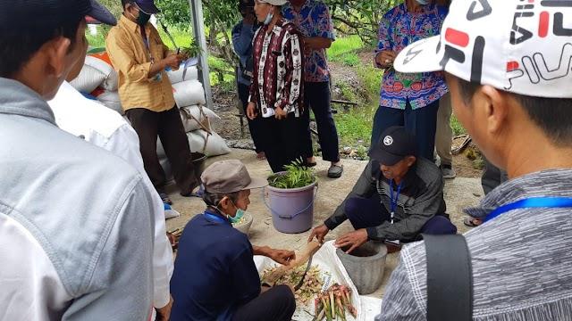 Pelatihan Budidaya Padi Lahan Rawa Bebas Residu Dukung Food Estate di Kapuas Murung