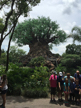 Animal Kingdom Shows Best Week Ever