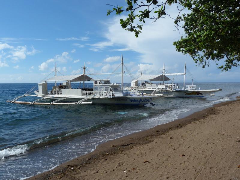Dauin, Dumaguete, APO Island (Negros) - philippines%2Bdeux%2B677.JPG
