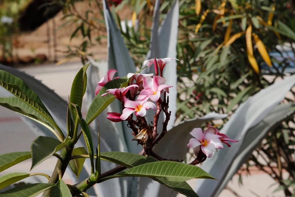 Mon jardin senegalais _MG_4817