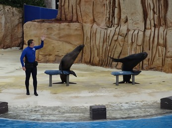 2018.08.09-026 spectacle d'otaries (15h03)