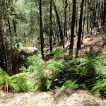 Steep gully beside trail (219497)