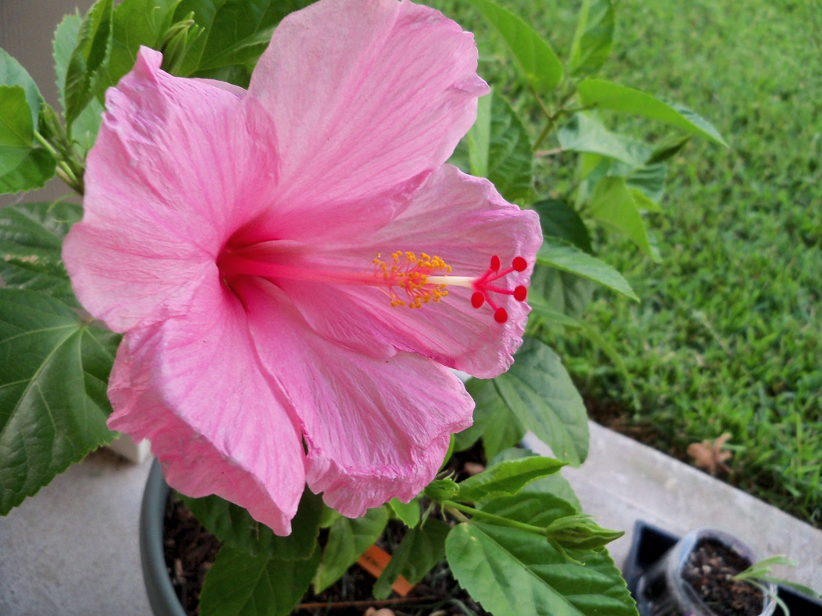 Gardening 2010, Part Three - 101_4333.JPG