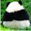 Yang Li's profile photo