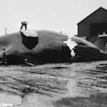 Man on whale AkDigArch.jpg