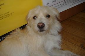Hostel puppy!