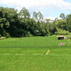 0238_Indonesien_Limberg.JPG