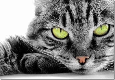 katten-jamar