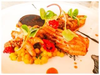 Branca cuttlefish