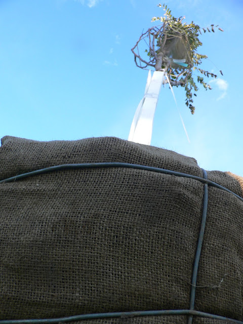 Tree Planting November 2010 - 110410%2B002.JPG
