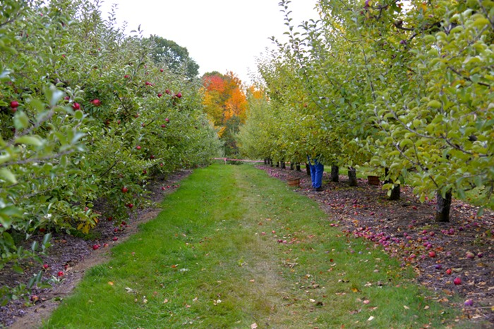 apple_picking_1