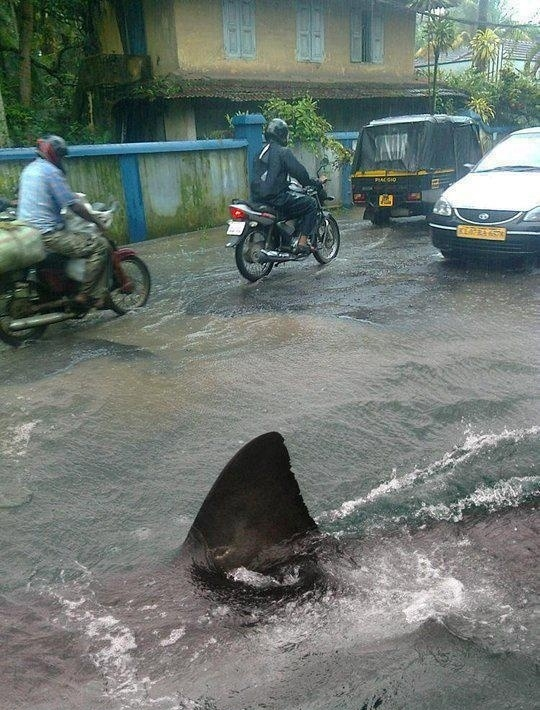 Meanwhile On Flooded Road