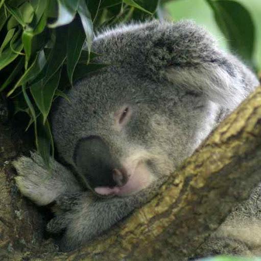 Taylor Baldwin (Koalatimejerky)