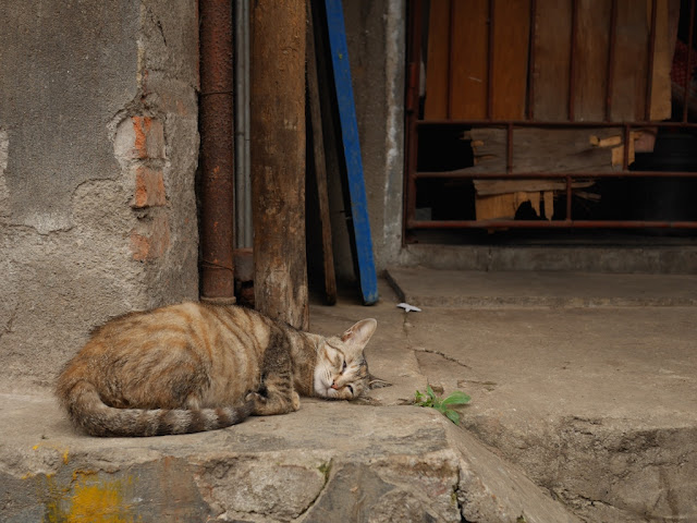 cat sleeping in Changsha, Hunan, China
