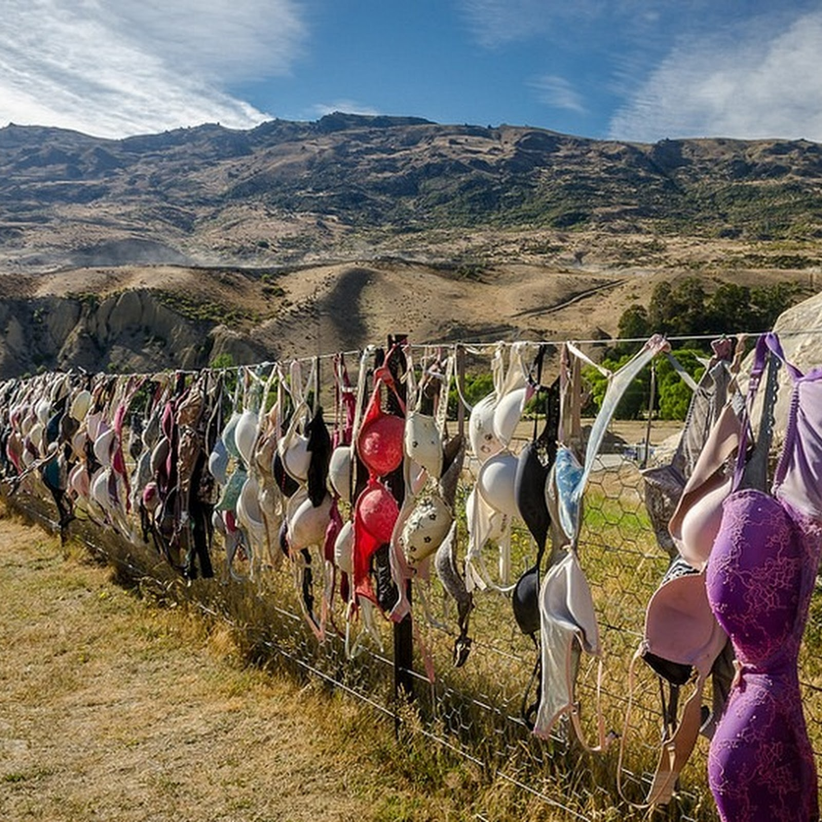 Decorating Fences With Trash, The New Zealander Way