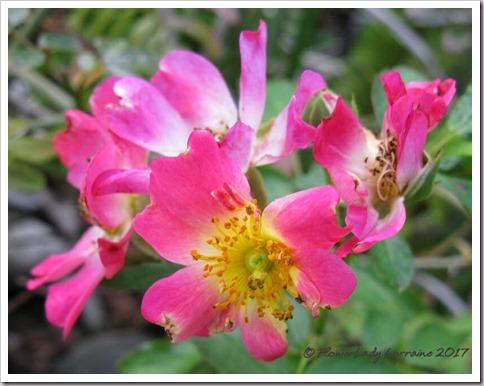 01-16-pink-drift