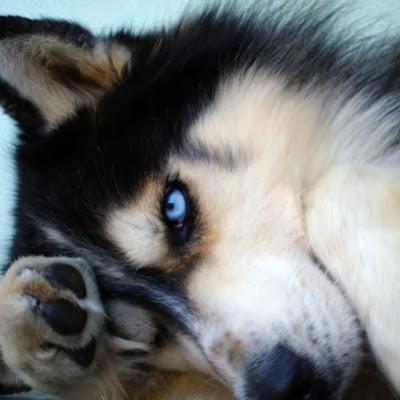 Wolfix