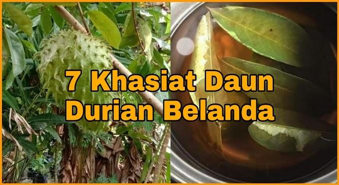 7 Khasiat Daun Durian Belanda