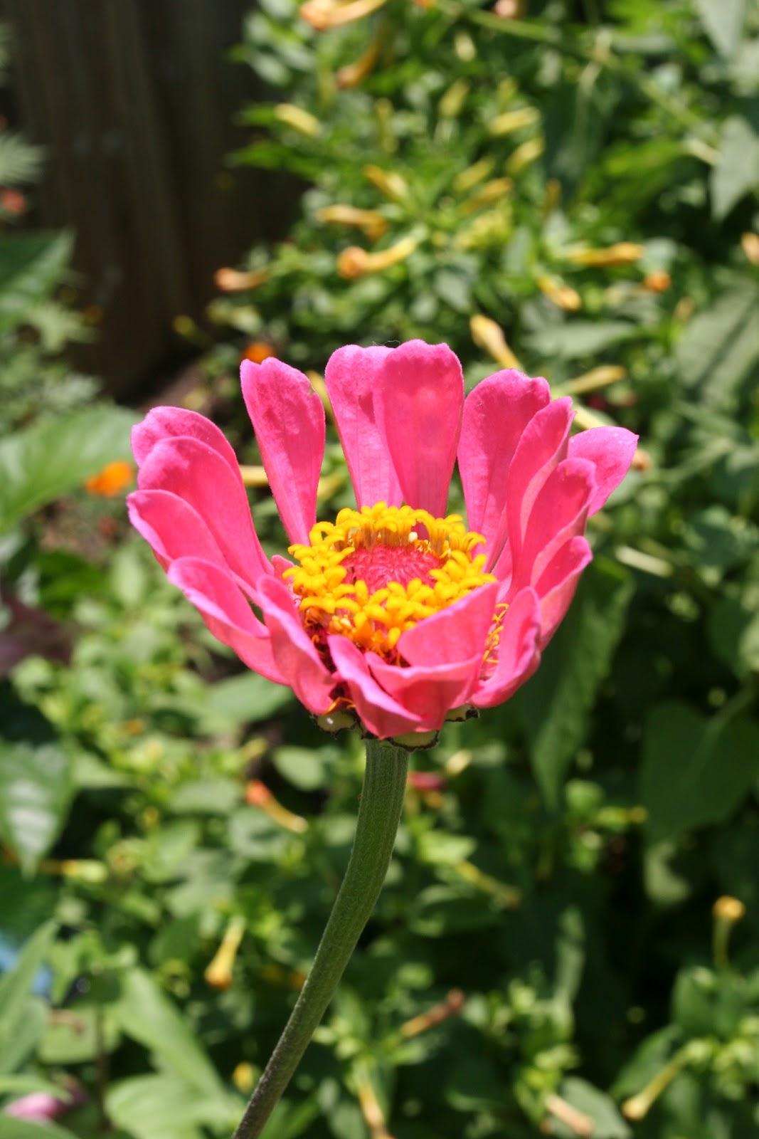 Gardening 2012 - IMG_3836.JPG
