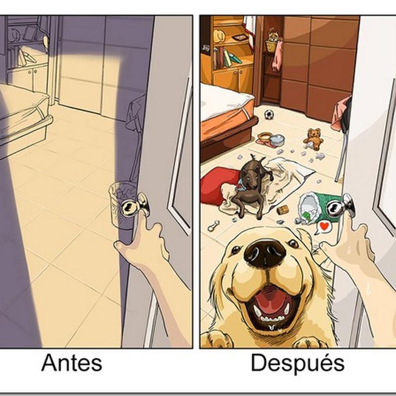 Antes y despues de tener perro