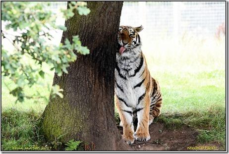 Yorkshire Wildlife Park - August