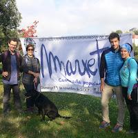 2017 11 19 Marxeta immadorda (1) - 1 de 141 (128)