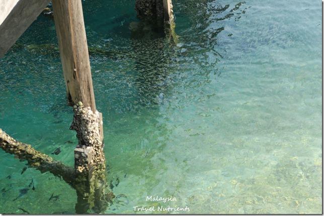 沙巴亞庇馬穆迪島 (42)
