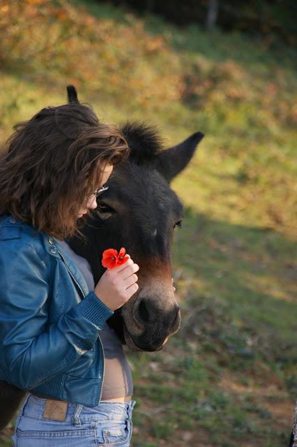 VOYOU - ONC bardot né en 2009 - adopté en avril 2011 par bea - Page 4 DSC01266