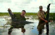 This is one big crocodile. 14 1/2 feet but massive in the head and girth. Glad his brother was not lurking nearby that day!