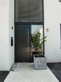 Unser Haselnuss-Strauch vor der Eingangstür