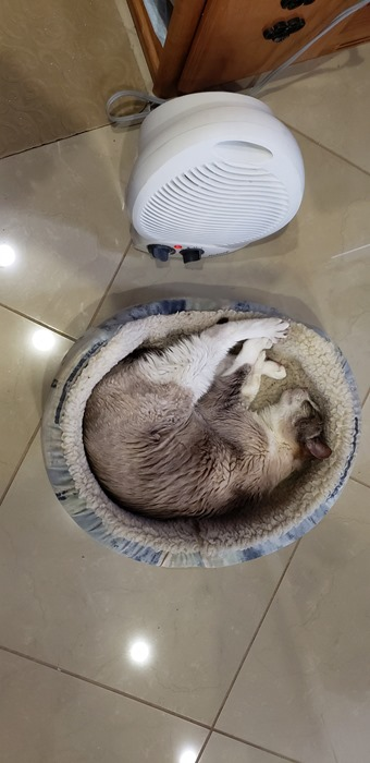 [Warm+Cat%5B4%5D]