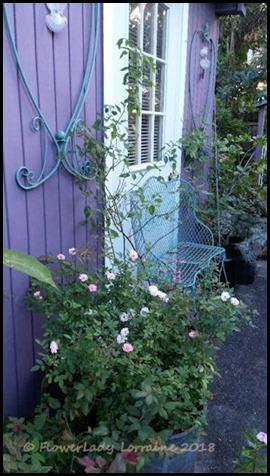 03-06-carpet-roses