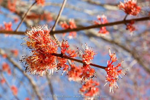 Spring Bloom-7278