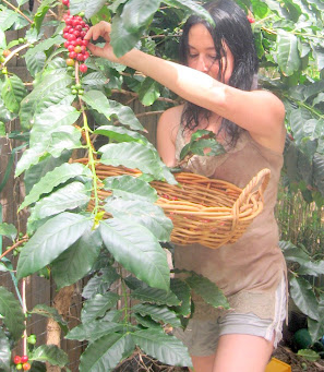 Michele picking coffee