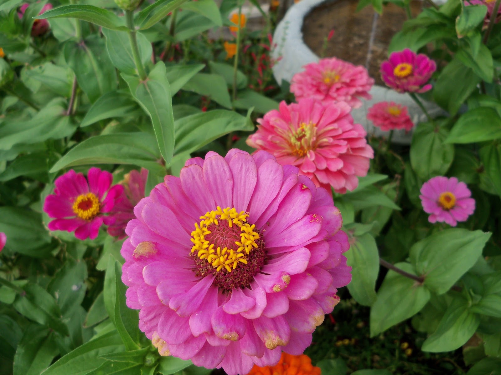 Gardening 2011 - 100_8895.JPG