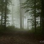 20111003_113327_IMG_5706_EOS_1000D.jpg