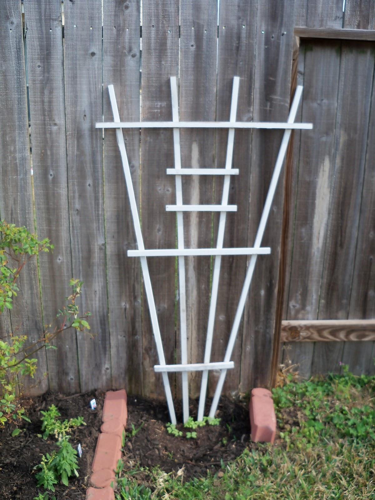 Gardening 2011 - 100_6615.JPG