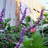 Gardening 2012 - 115_1812.JPG