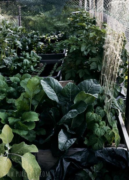 [Garden-4%255B2%255D.jpg]