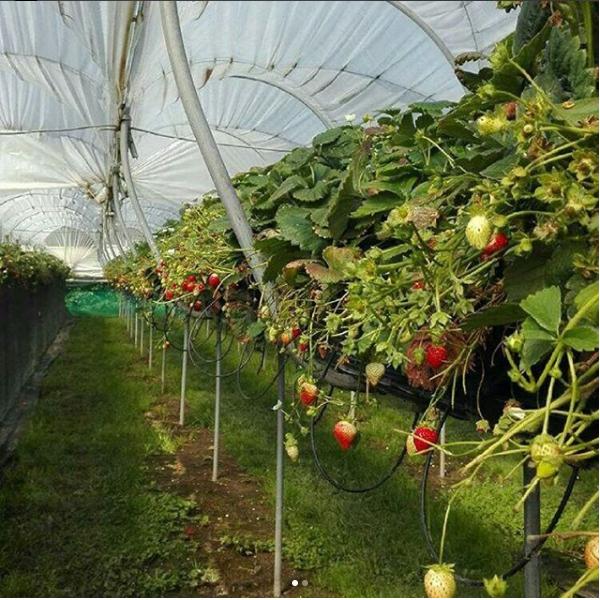 [garden%5B3%5D]