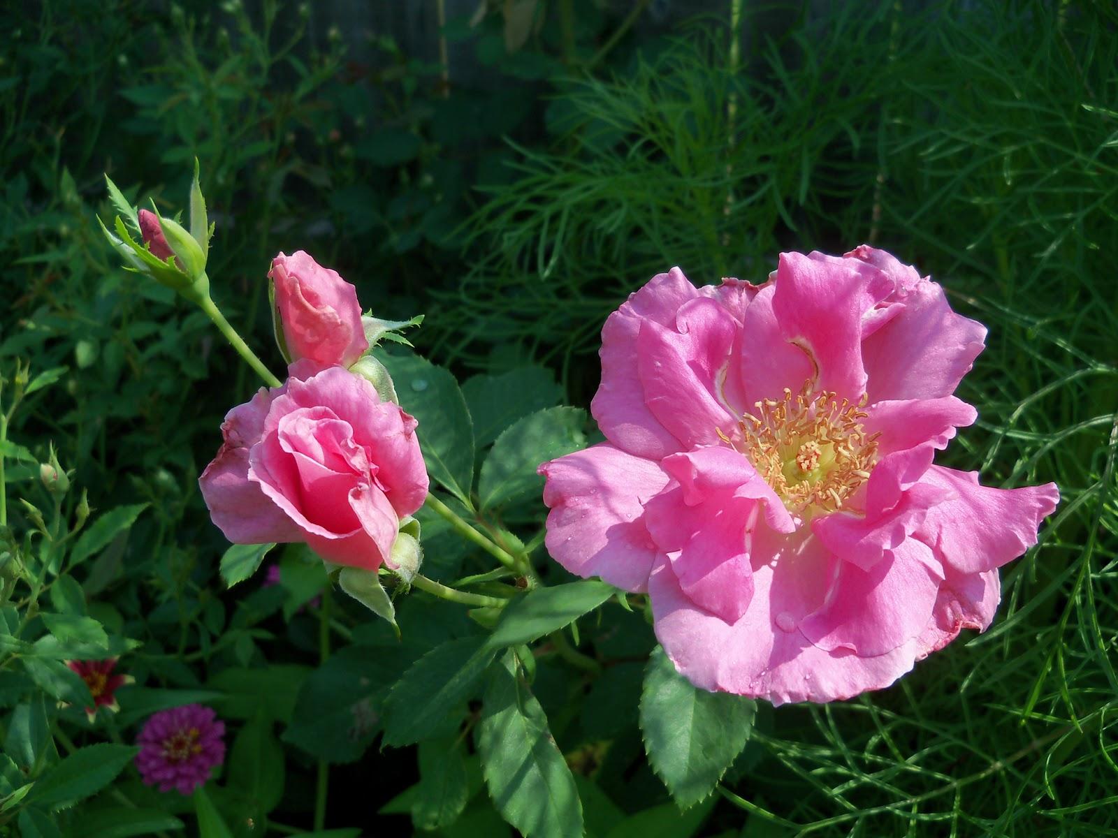 Gardening 2010, Part Two - 101_3283.JPG