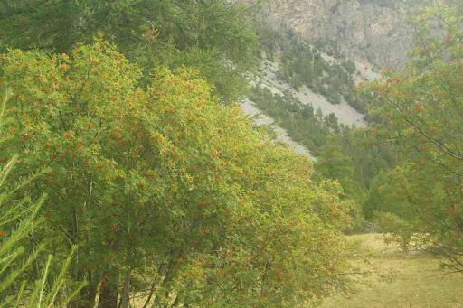 Vallée Étroite