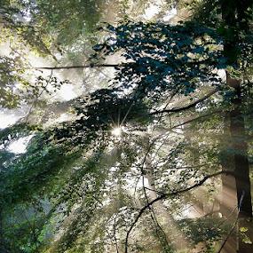 by Gordana Kvajo - Landscapes Forests