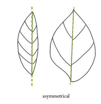 contoh komposisi gambar simetris,gambar komposisi simetris asimetris dan sentral,gambar komposisi simetris asimetris sentral,komposisi gambar simetris dan asimetris,buatlah contoh gambar komposisi simetris,berikan contoh gambar komposisi simetris,gambar komposisi asimetris adalah,gambar komposisi a simetris,contoh gambar komposisi a simetris